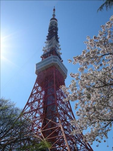 14東京タワー桜.JPG